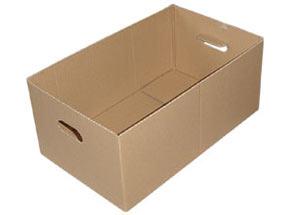 DINOPOL - karton zbiorczy 180